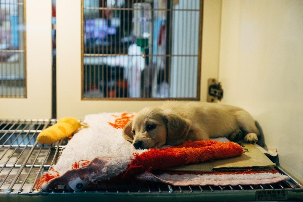 perros veterinario