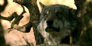 No, en la naturaleza no existe tal cosa como un 'macho alfa'