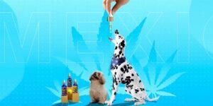 Pet Magic, la primera marca de aceite de CBD exclusivo para mascotas
