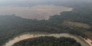 La humanidad ya destruyó dos tercios de los bosques tropicales del mundo, según datos de la Fundación Rainforest