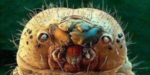 Conoce a los ácaros faciales, los bichos que ponen huevos en tu cara