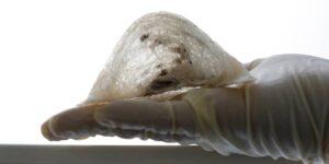 Cómo un nido hecho con saliva de pájaro se convirtió en un manjar, un producto para el cuidado de la piel y un regalo en algunos países asiáticos