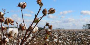 Lo que sabemos sobre el boicot a marcas de ropa como H&M, Nike y Adidas en China por criticar la producción de algodón local
