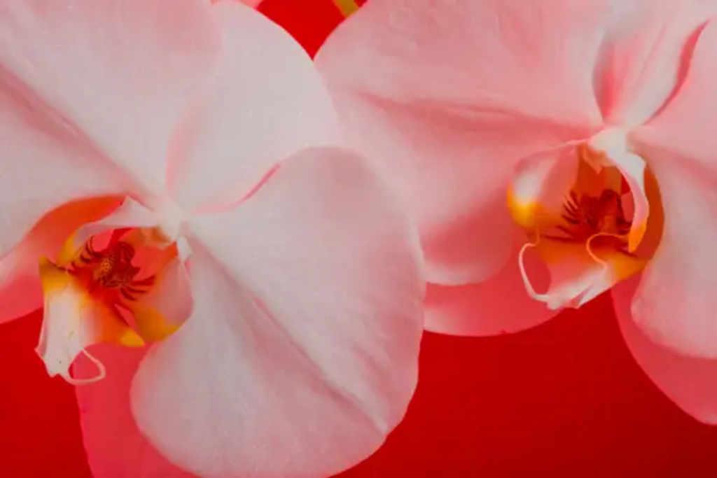 Flor caliente | Business Insider México
