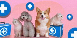 ¿Cómo funcionan los seguros de mascotas y qué te cubren?