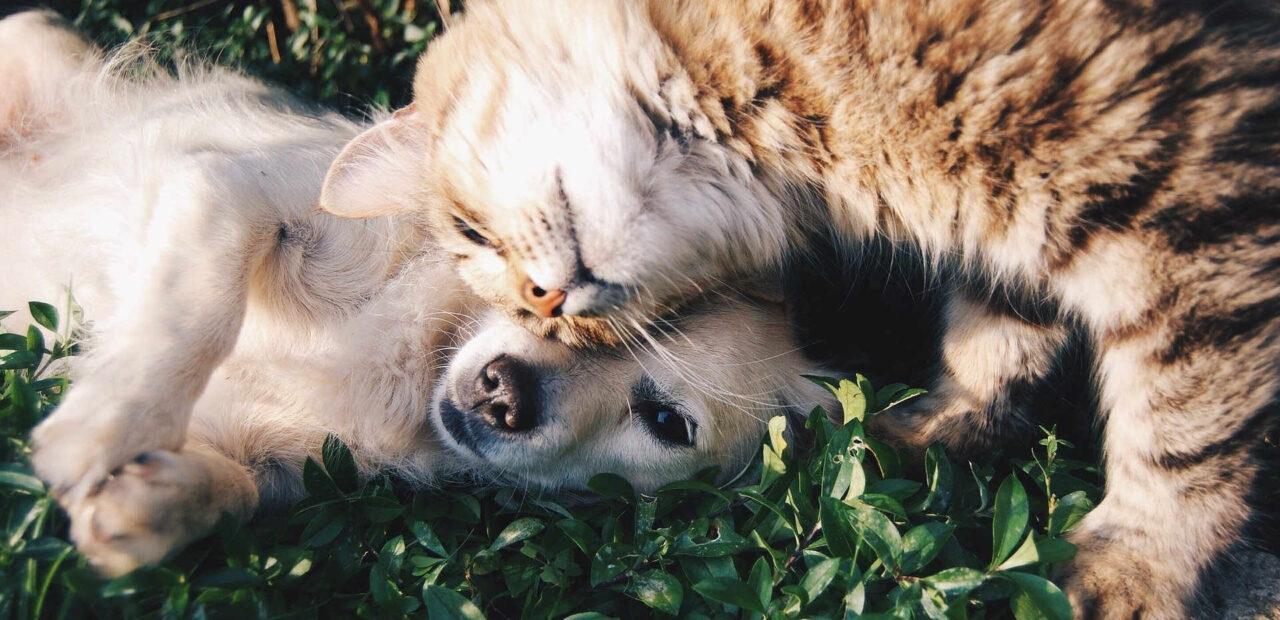 criptodivisas perros gatos oro | Business Insider México