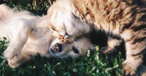 Dime tu mascota y te diré qué tipo de inversionista eres —quienes compran oro, aman a los gatos; si prefieren las criptomonedas, a los perros