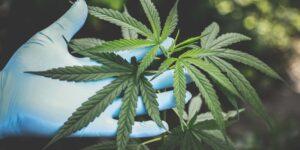 Nueva York legaliza la marihuana recreativa para adultos —el gobernador Andrew Cuomo firma un nuevo proyecto de ley