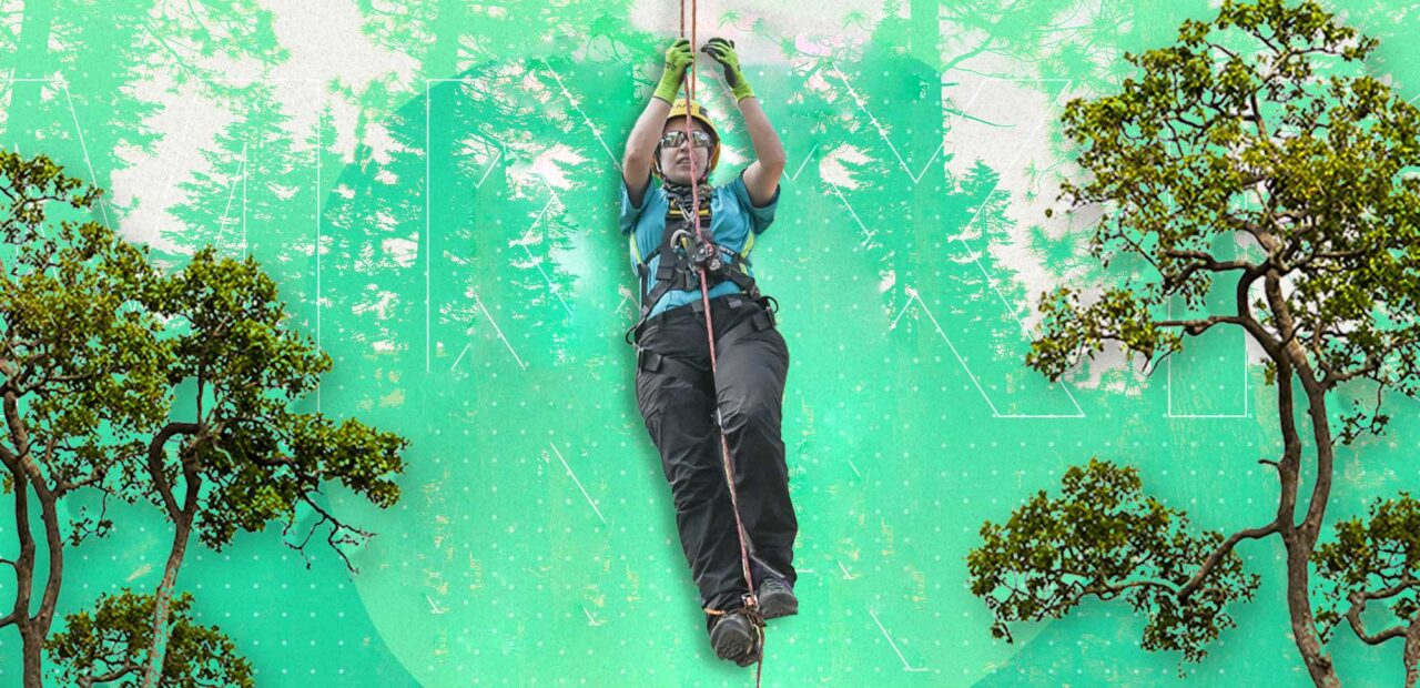 arboristas | Business Insider Mexico