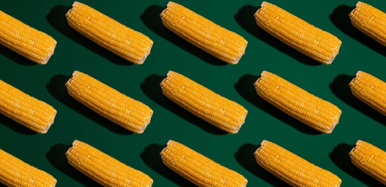 inflacion maiz   Business Insider Mexico