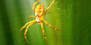 Conoce la música de las arañas —así es como suenan las telarañas