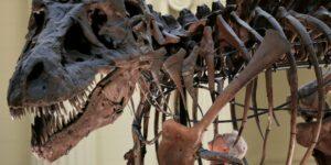 Los tiranosaurios pudieron haber cazado en manadas como lobos, según un nuevo estudio
