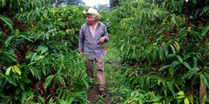 Bayer logra una suspensión judicial contra la prohibición de México al uso del glifosato