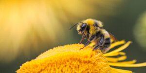 Un grupo de científicos entrenó a abejas para que puedan detectar infecciones de Covid-19
