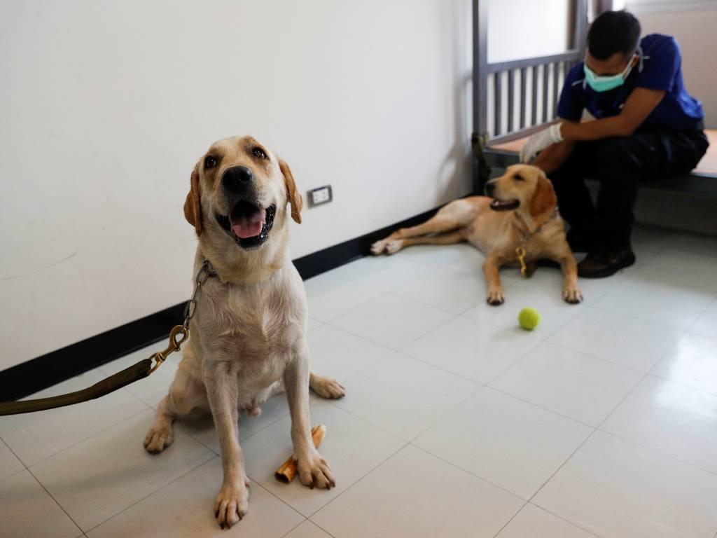 perros Covid-19