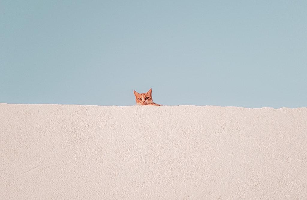Gatos sobrevive caída | Business Insider Mexico