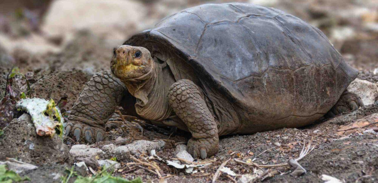 tortugas_islas_galápagos  Business Insider México