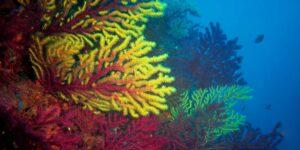 La tecnología de restauración de arrecifes de coral Ocean-Shot busca combatir los daños del cambio climático