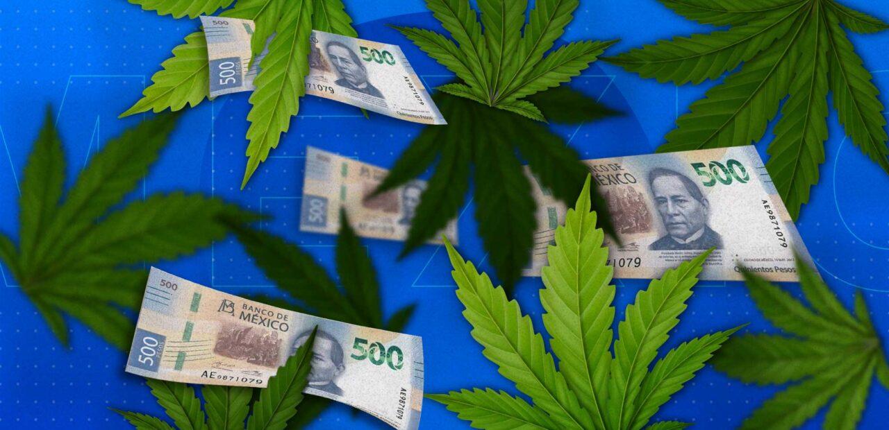 regulación_cannabis |Business Insider México