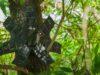 grabadora de bosques Rainforest Connection | Business Insider Mexico