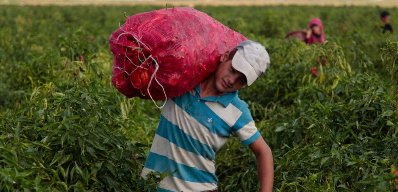 trabajo infantil méxico   business insider mexico