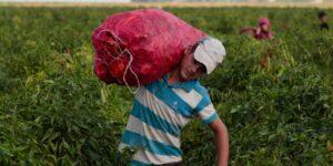 Trabajo infantil aumenta en el mundo por primera vez en 20 años —México todavía tiene 3.3 millones de niñas y niños trabajando