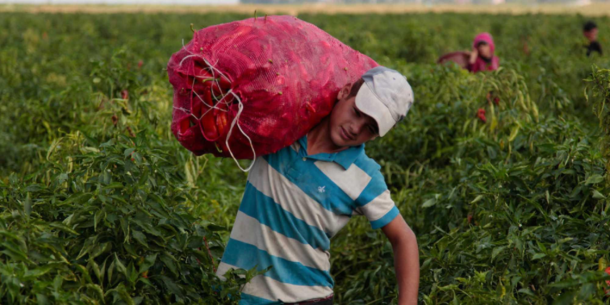 trabajo infantil méxico | business insider mexico