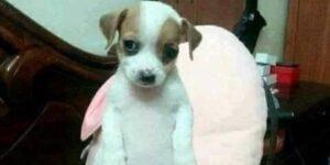 Si tu mascota se parece al meme del «perro panzón», llévalo al veterinario — estas son las enfermedades que puede padecer