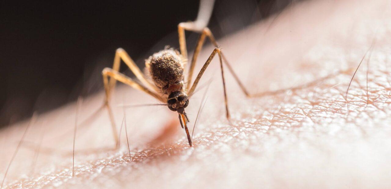 picadura_mosquitos | Business Insider México