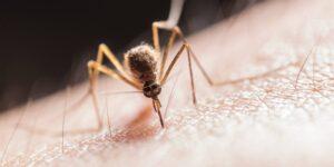 ¿Es alérgico a las picaduras de mosquitos? Cómo reconocer los signos del síndrome de Skeeter y cuándo buscar ayuda