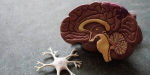 Los sobrevivientes de Covid-19 pueden sufrir una pérdida de materia gris y otro tejido cerebral con el tiempo, sugiere un estudio