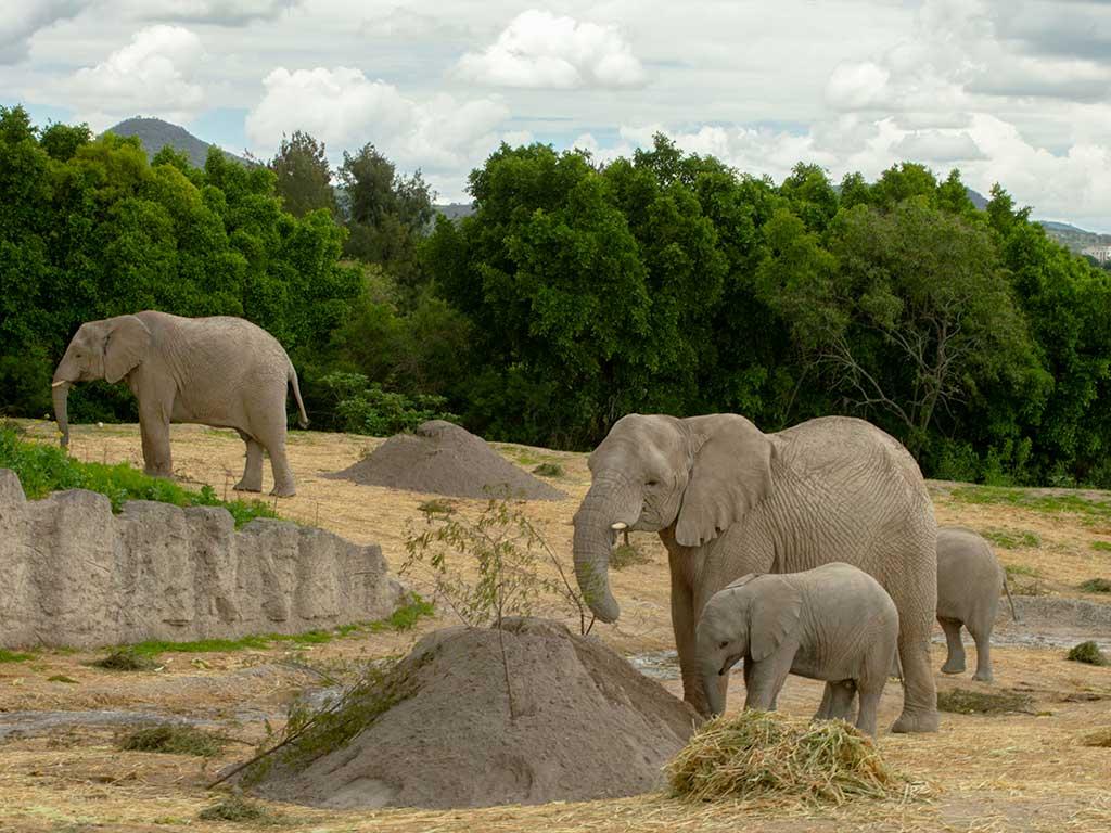 Lester elefante Africam Safari | Business Insider México