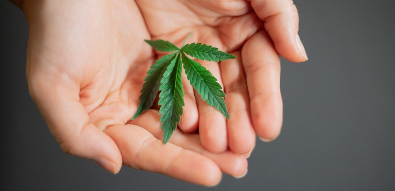 marihuana suprema corte   Business Insider Mexico
