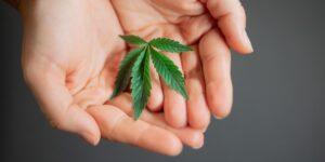 La Suprema Corte de Justicia de la Nación defiende el uso recreativo de la cannabis, pero aún no hay ley para regular su consumo