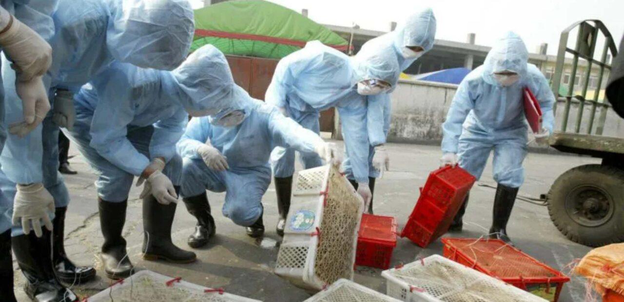 granjas-animales-salvajes-china |Business Insider México