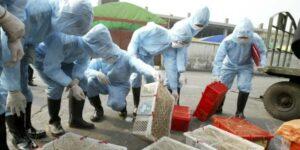 La investigación sobre el origen del coronavirus se complica —las granjas de animales salvajes chinas están vacías
