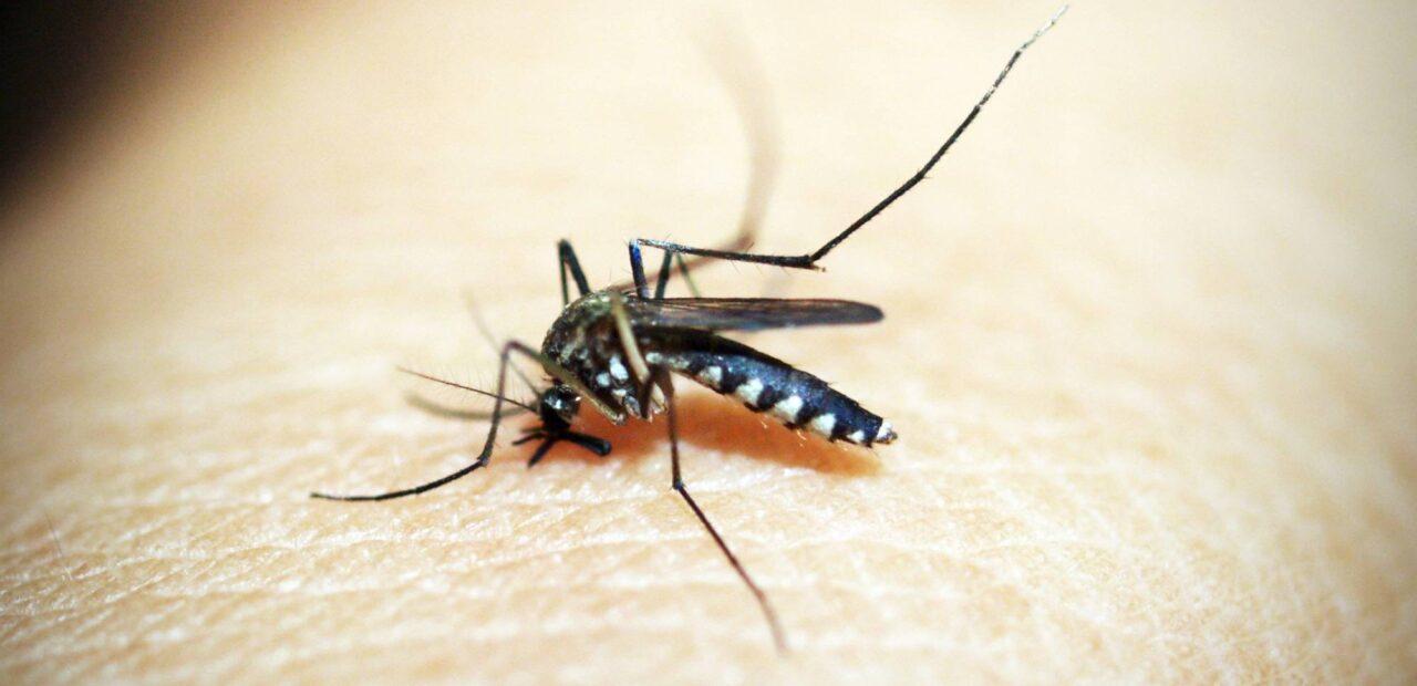 mosquitos | Business Insider Mexico