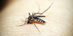 Esta es la razón por la que los mosquitos pican más a algunas personas —y cómo tratar la picazón