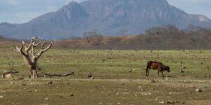 El suministro de agua en México genera inquietud ante una sequía que pone en riesgo los cultivos