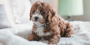 ¡Que la ansiedad no afecte a tu perro! —así puedes ayudarle cuando vuelvas al trabajo