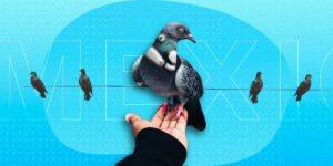 'Birds Aren't Real', la teoría de la conspiración que dice que todos los pájaros son realmente drones espías, toma vuelo en Estados Unidos