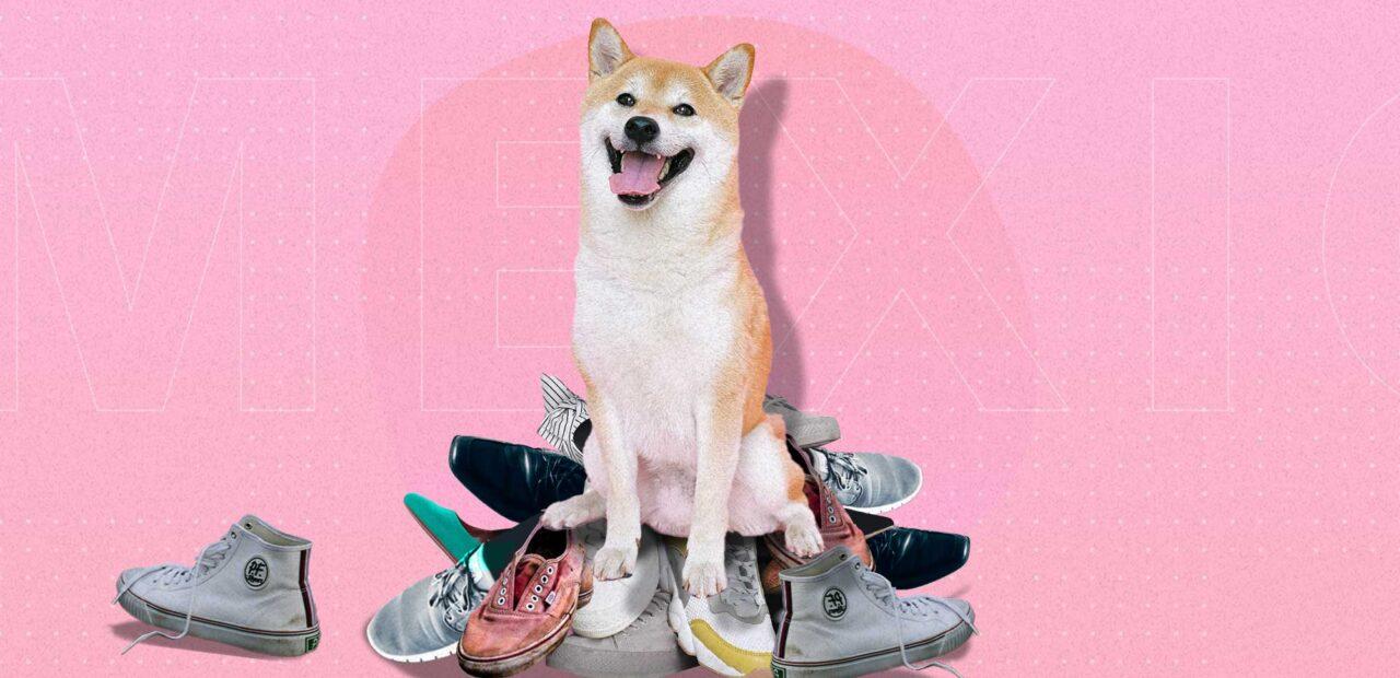 zapatos perro masticar   Business Insider México