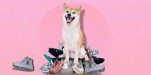 ¿Tu perro prefiere tus zapatos que sus juguetes? —así puedes evitar quedarte descalzo
