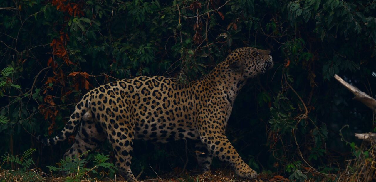 Amazonia | Business Insider Mexico
