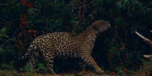 Más de 10,000 especies están en peligro de extinción en la Amazonia debido a la destrucción de la selva, según estudio