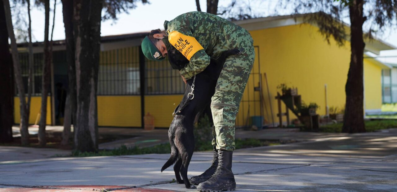 albergue perros callejeros   Business Insider México