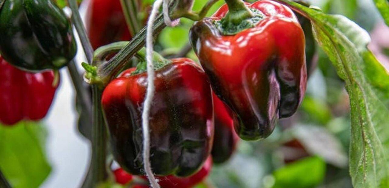 astronautas dieta | Business Insider Mexico