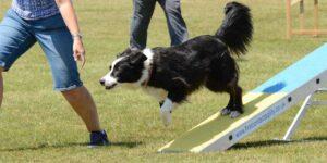 ¡Muévete ahora! Estos son 5 consejos para hacer ejercicio con tu perro