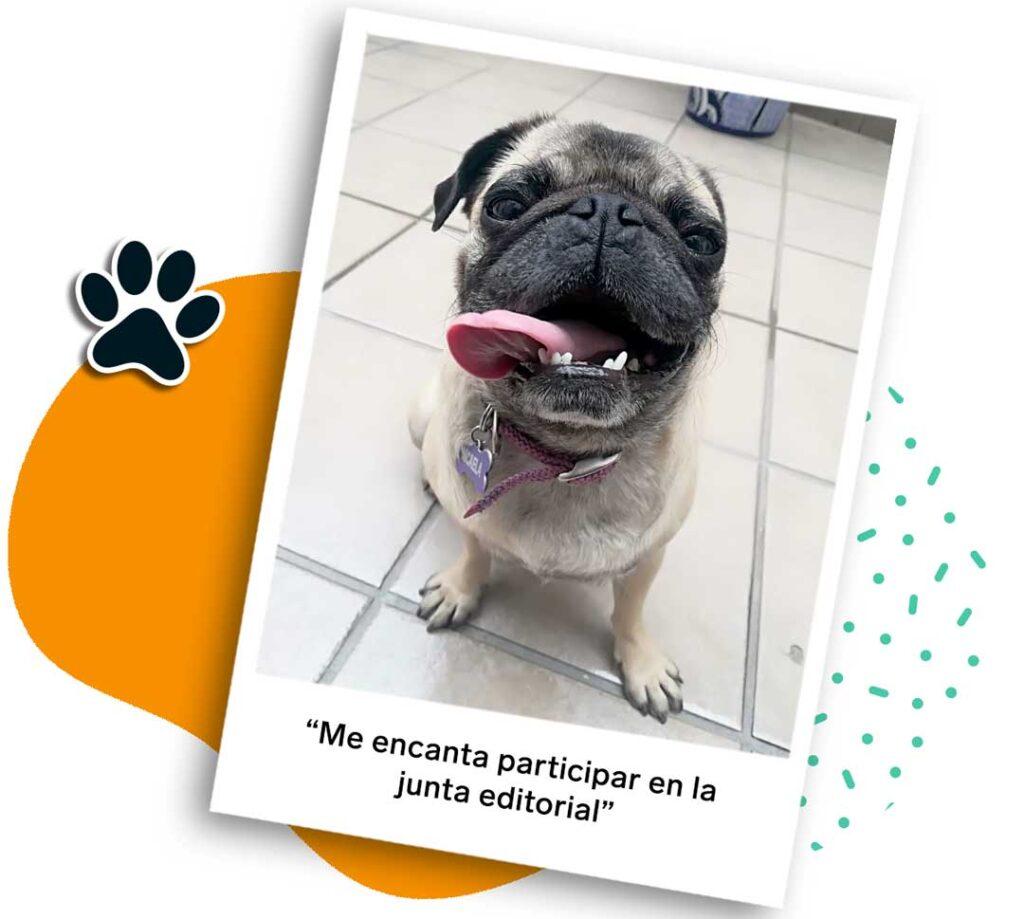 Día mundial del perro   Business Insider