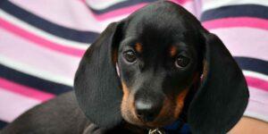 El amor a los perros nunca deja de crecer —las búsquedas en internet sobre ellos en México lo comprueban